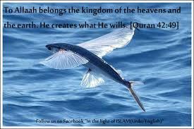 creation Allah