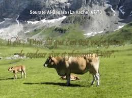 baqara2